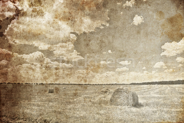 фото ретро-стиле трава лет Сток-фото © Massonforstock