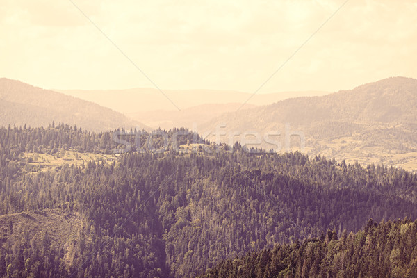 View on Ukrainian Carpathian mountains. Stock photo © Massonforstock