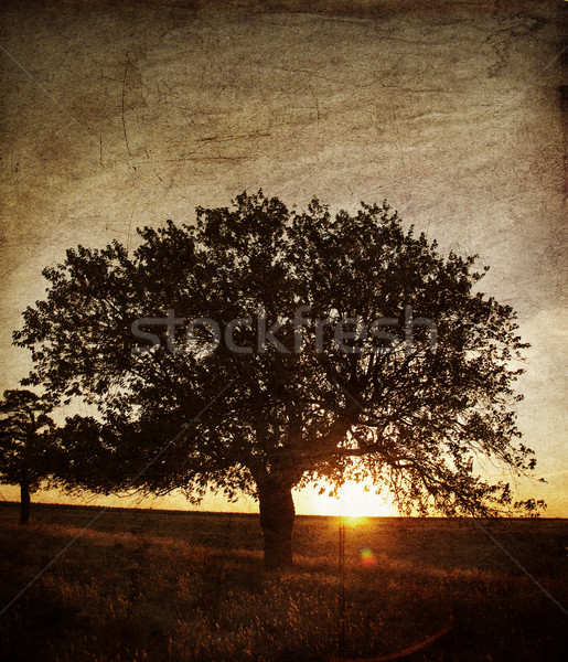 Tree in the summer field. Photo in old image style. Stock photo © Massonforstock