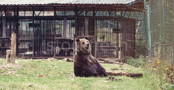 クマ リザーブ ウクライナ ツリー 森林 自然 ストックフォト © Massonforstock