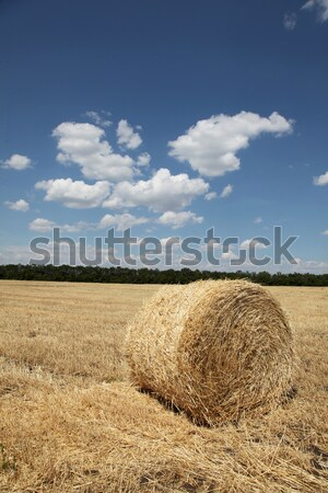 Straw bales in a field with blue sky  Stock photo © Massonforstock