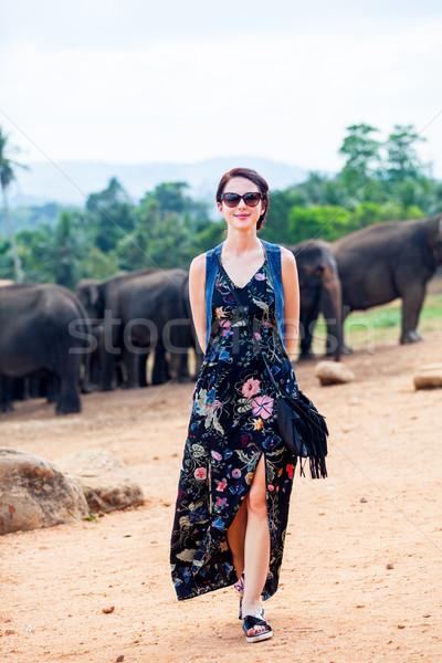 Young woman and wild elephants Stock photo © Massonforstock
