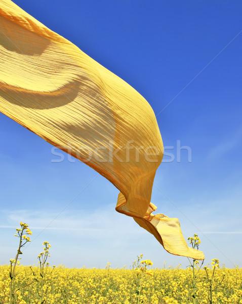 Seda violación campo cielo belleza relajarse Foto stock © Massonforstock