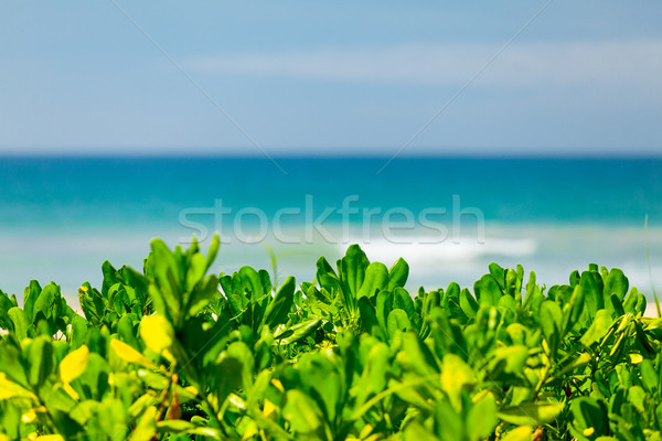 Vue vert Bush indian océan plage Photo stock © Massonforstock