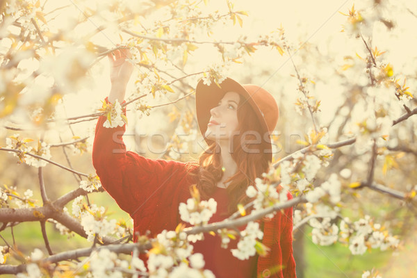 women in blossom apple tree garden Stock photo © Massonforstock