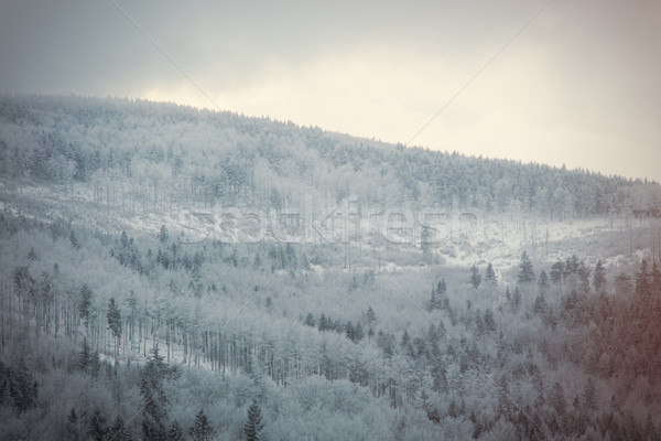 Mystery snow forest  Stock photo © Massonforstock