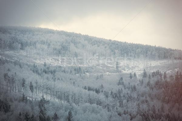 Gizem kar orman çam ağacı ağaç doğa Stok fotoğraf © Massonforstock