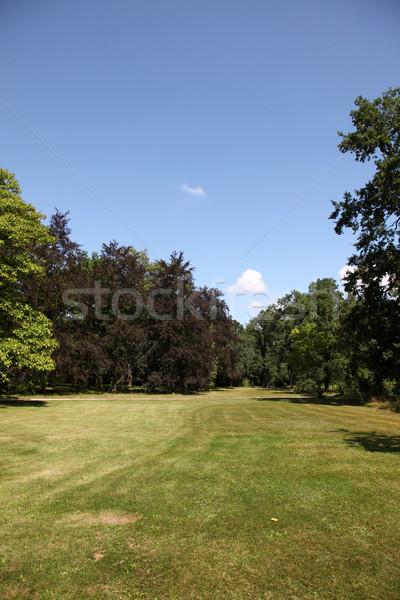 зеленый парка Германия дерево весны трава Сток-фото © Massonforstock
