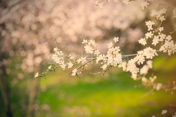 Foto stock: Foto · hermosa · árbol · maravilloso · pequeño