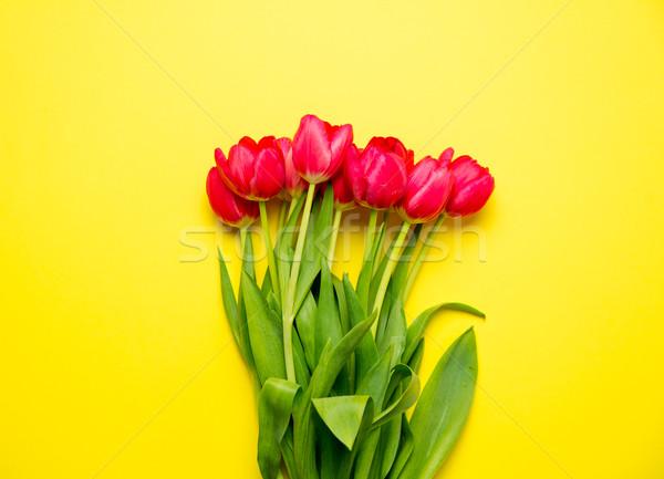Hermosa rojo tulipanes maravilloso amarillo Foto stock © Massonforstock