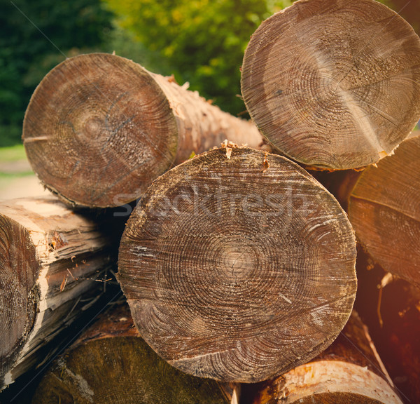 photo of beautiful bunch of felled and cut trees on the trees ba Stock photo © Massonforstock