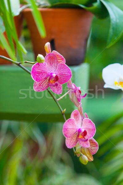 Belle · orchidée · fleur · vert · effet · de · serre ...