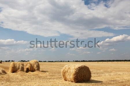 Gouden hooi platteland gras zomer veld Stockfoto © Massonforstock