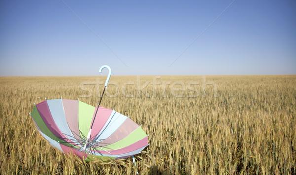 Esernyő búzamező divat természet nyár szél Stock fotó © Massonforstock