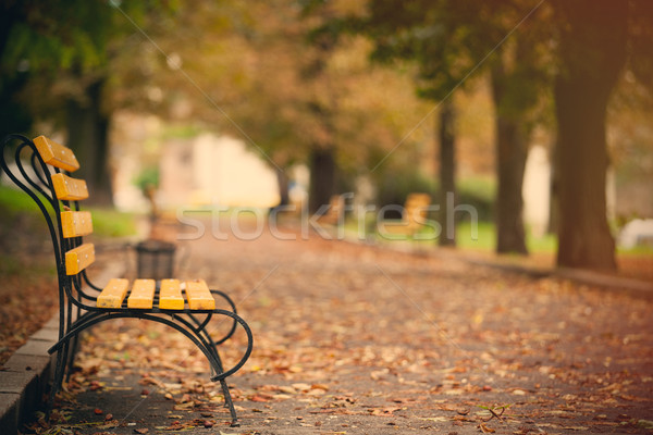 photo of beautiful autumn park full of benches and folliage in w Stock photo © Massonforstock