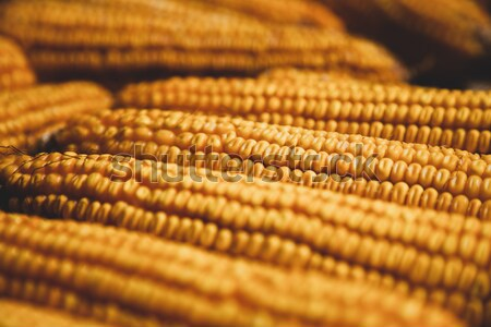 Old corn Stock photo © Massonforstock
