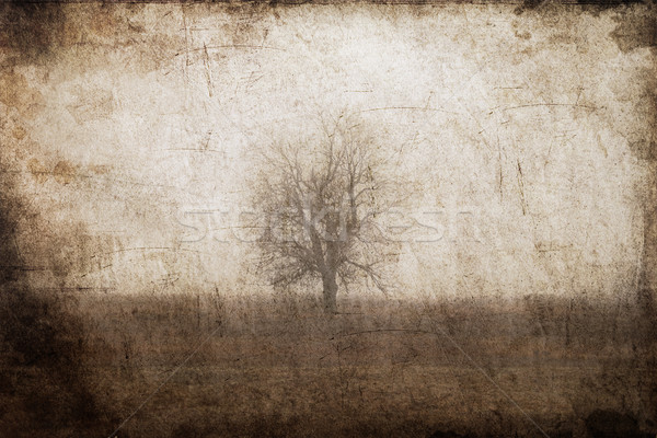 Lonely tree at field. Photo in old color image style. Stock photo © Massonforstock