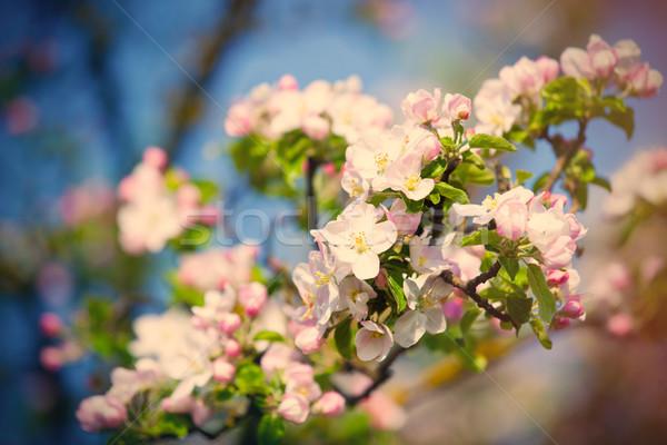 blooming tree Stock photo © Massonforstock