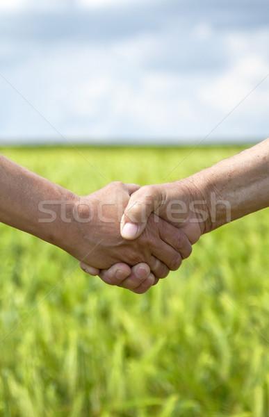 Farmers handshake in green wheat field.  Stock photo © Massonforstock