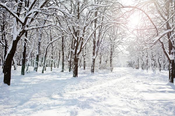 Winter park Stock photo © Massonforstock