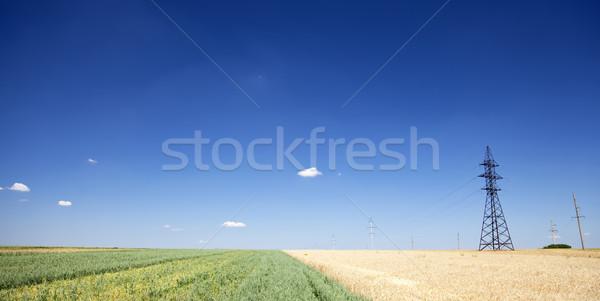 Сток-фото: электрические · чистой · Панорама · Blue · Sky · пшеницы