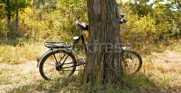 Old bike near tree. Stock photo © Massonforstock