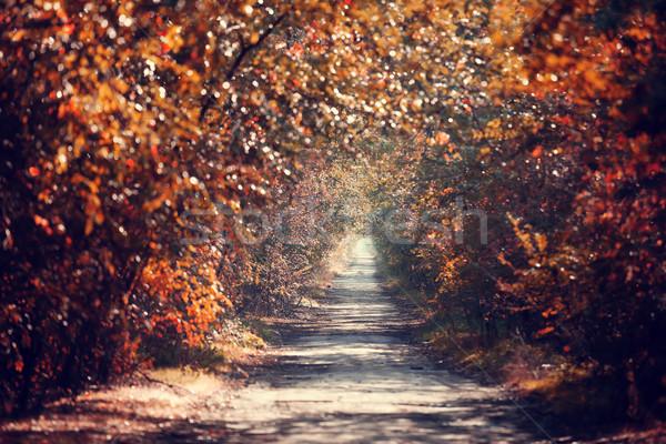 Autumn alley in Odessa, Ukraine Stock photo © Massonforstock