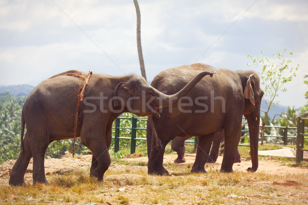 Elephant group near a jungle Stock photo © Massonforstock