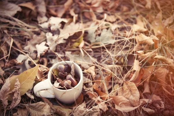 Tasse herbe feuille thé automne blanche Photo stock © Massonforstock