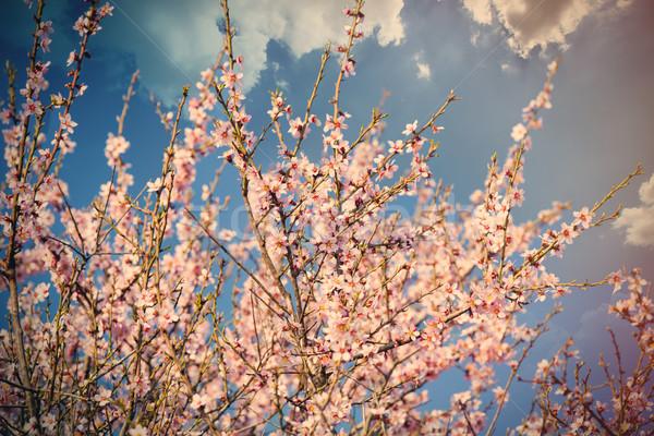 фото красивой дерево замечательный небольшой Сток-фото © Massonforstock