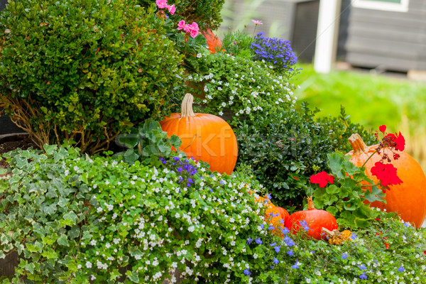 photo of beautiful garden full of bushes and pumpkins of differe Stock photo © Massonforstock