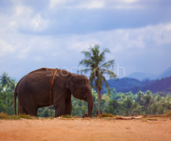 Lonely elephant in a jungle  Stock photo © Massonforstock