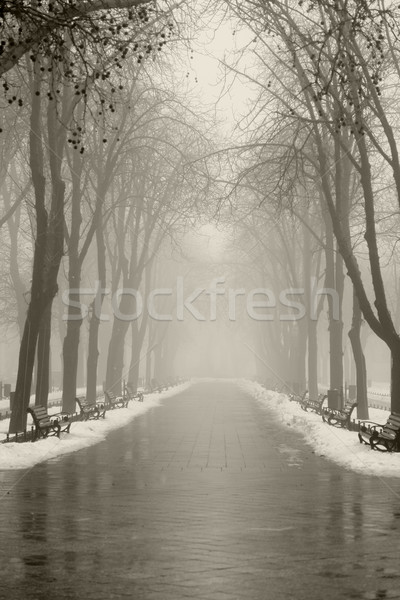 Winter alley in Odessa, Ukraine. Stock photo © Massonforstock