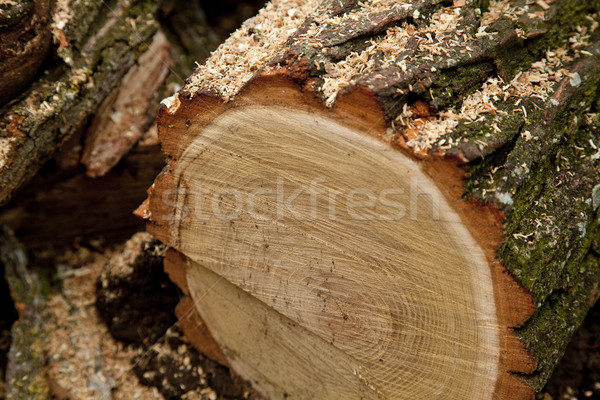 Woods after sawing Stock photo © Massonforstock