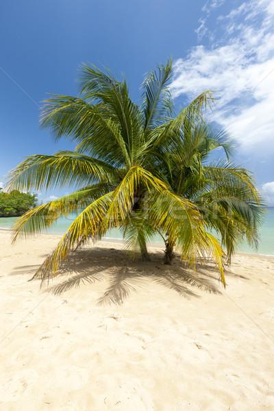 Сток-фото: пляж · Тропический · остров · синий · воды · песок · ладонями