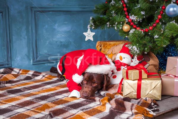 черный Лабрадор ретривер подарки Рождества украшения весело Сток-фото © master1305