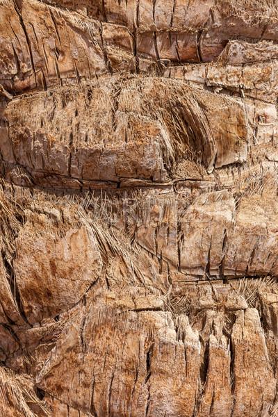 Palma texture pattern dettaglio foto albero Foto d'archivio © master1305