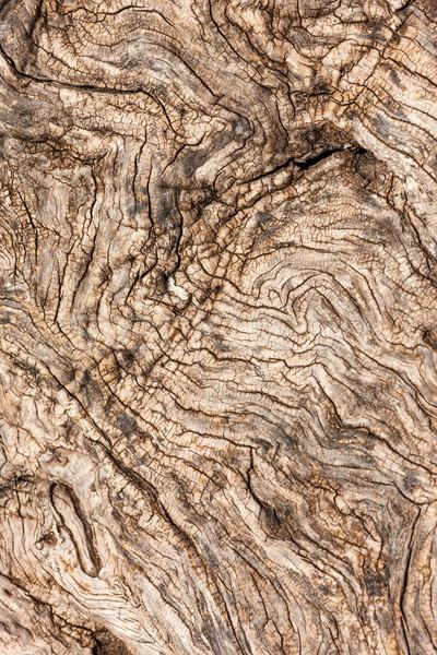 Naturales árbol corteza textura madera forestales Foto stock © master1305