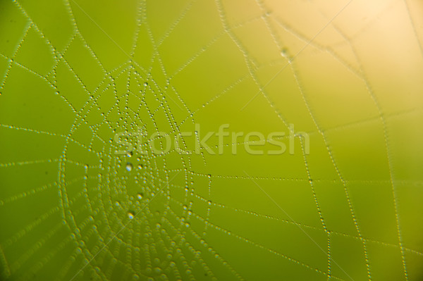 The web with water drops Stock photo © master1305