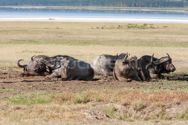 アフリカ ケニア アフリカ 黒 うそをつく ストックフォト © master1305