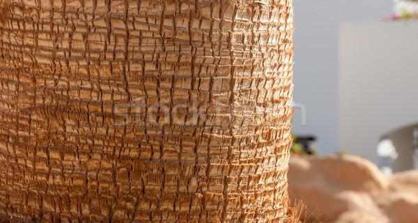 Palmera textura patrón detalle foto árbol Foto stock © master1305
