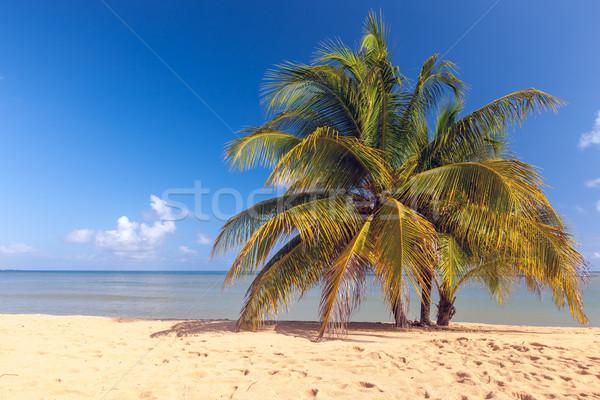 Strand tropisch eiland Blauw water zand palmen Stockfoto © master1305