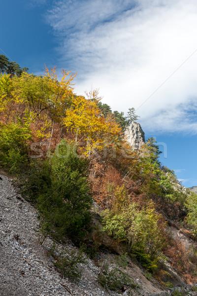 Черногория гор лет дерево пейзаж Сток-фото © master1305