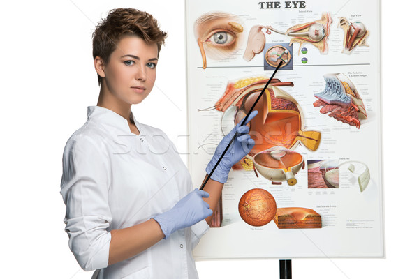 Optician or oculist woman tells about structure of the eye Stock photo © master1305