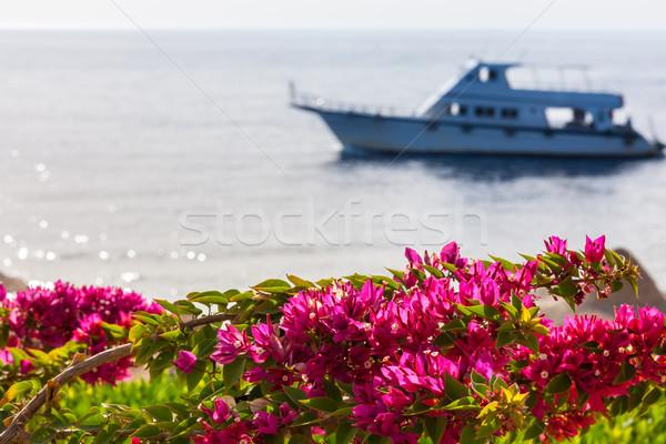 ストックフォト: ピンク · エジプト · 美 · 背景 · 海 · セーリング