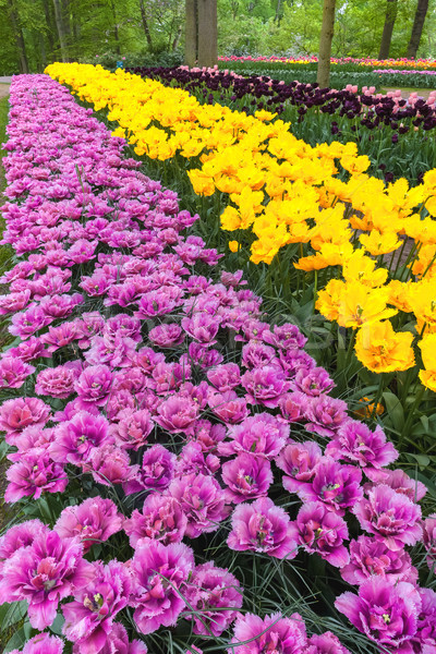 Lâle alan bahçeler çiçek bahar Stok fotoğraf © master1305