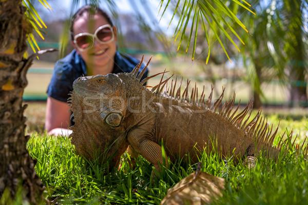 Portret tropische leguaan natuur kleur Stockfoto © master1305