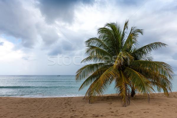 Spiaggia blu acqua sabbia palme Foto d'archivio © master1305