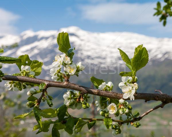 Landschap bergen noors voorjaar Stockfoto © master1305