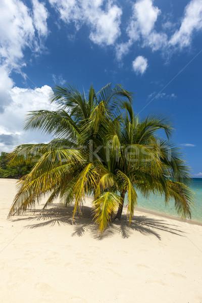 пляж Тропический остров синий воды песок ладонями Сток-фото © master1305